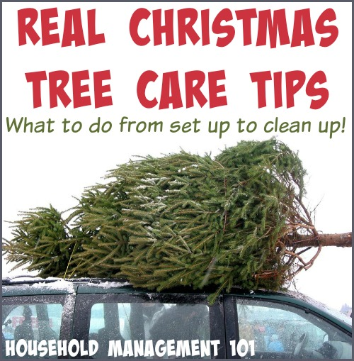 Real Christmas Tree Care Tips
