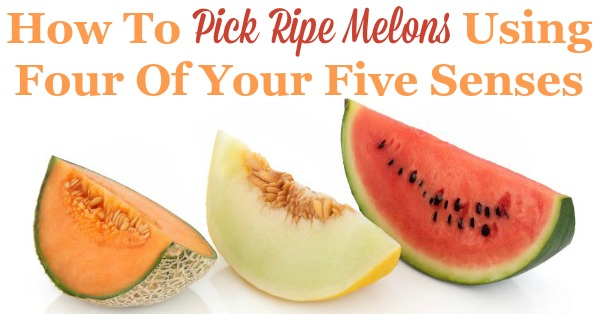How to pick ripe melons in the store at the farmers market stand using four of your five senses, so you can enjoy your fifth sense, your sense of taste {on Household Management 101}