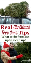 Real Christmas Tree Care