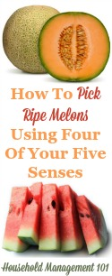 How To Pick Ripe Melons