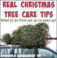 Real Christmas Tree Care Tips